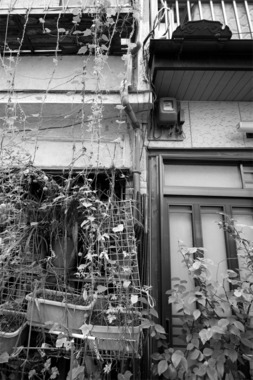 東京鳩の街タイルのある家